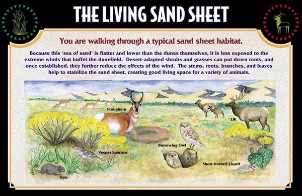 Sign Detail: The Living Sand Sheet